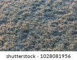 frost on the lawn a cold... | Shutterstock . vector #1028081956