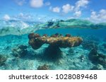 cloudy blue sky and natural... | Shutterstock . vector #1028089468