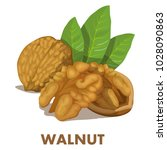 walnut. nut food. isolated on... | Shutterstock .eps vector #1028090863
