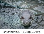 otaru  hokkaido  japan   7 may... | Shutterstock . vector #1028106496