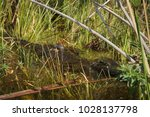 hidding crocodile while... | Shutterstock . vector #1028137798