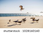 one seagull soaring above rest... | Shutterstock . vector #1028160160