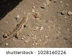 lizard in the sun  valdes... | Shutterstock . vector #1028160226