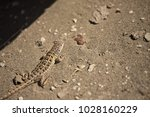 lizard in the sun  valdes... | Shutterstock . vector #1028160229