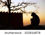 monkey temple galwar bagh in... | Shutterstock . vector #102816878