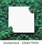 creative layout made leaves... | Shutterstock . vector #1028179534
