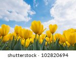 Floral Background. Tulips.