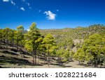 west of gran canaria  february... | Shutterstock . vector #1028221684