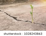 green young plant growing on... | Shutterstock . vector #1028243863
