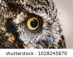 Stock photo photo of an owl in macro photography high resolution photo of owl cub the bureaucratic owl also 1028245870