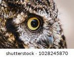 photo of an owl in macro... | Shutterstock . vector #1028245870