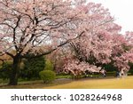 cherry blossom at imperial east ... | Shutterstock . vector #1028264968