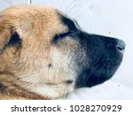 the dogs head | Shutterstock . vector #1028270929