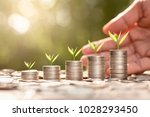 the seedlings are grown on five ... | Shutterstock . vector #1028293450