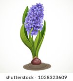 blue hyacinth grows from a bulb ... | Shutterstock .eps vector #1028323609