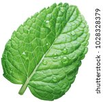 perfect spearmint leaf or mint... | Shutterstock . vector #1028328379