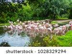 flock of flamingos in prague... | Shutterstock . vector #1028329294