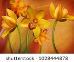 Floral Background Of Orchids ...