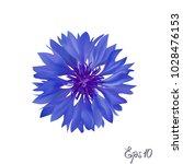 dark blue cornflower. isolated... | Shutterstock .eps vector #1028476153