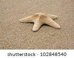 starfish on sand   Shutterstock . vector #102848540