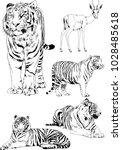vector drawings sketches... | Shutterstock .eps vector #1028485618