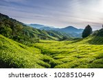 view over the tea plantage in... | Shutterstock . vector #1028510449