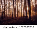 mystical autumn forest. ... | Shutterstock . vector #1028527816