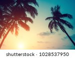 silhouettes of palm leaves... | Shutterstock . vector #1028537950