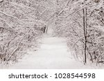 beautiful winter forest with a...   Shutterstock . vector #1028544598