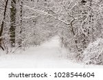 beautiful winter forest with a...   Shutterstock . vector #1028544604