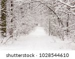 beautiful winter forest with a...   Shutterstock . vector #1028544610