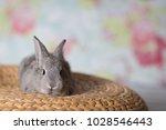 cute little bunny rabbit with... | Shutterstock . vector #1028546443