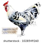 hamburg rooster. poultry... | Shutterstock . vector #1028549260