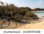 mangrove plant in ras mohammed...   Shutterstock . vector #1028555308