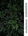 tropical leaf background dark... | Shutterstock . vector #1028560954