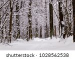 beautiful winter forest with a...   Shutterstock . vector #1028562538