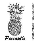 vector hand drawn pineapple.... | Shutterstock .eps vector #1028563000