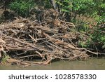 Heap Of Dead Branches Wash......