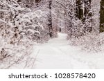 beautiful winter forest with a...   Shutterstock . vector #1028578420