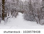 beautiful winter forest with a...   Shutterstock . vector #1028578438