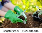 woman planting seedlings in bed ... | Shutterstock . vector #1028586586
