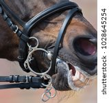 Small photo of Pelham bridle with flash noseband on head of brown horse. Close up sport picture.