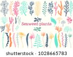 sea plants and aquarium seaweed ... | Shutterstock .eps vector #1028665783