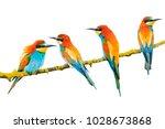 beautiful exotic birds isolated ... | Shutterstock . vector #1028673868