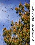 monarch butterfly biosphere... | Shutterstock . vector #1028673940