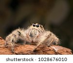 spider and spider web on the... | Shutterstock . vector #1028676010