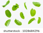 fly fresh raw mint leaves... | Shutterstock . vector #1028684296