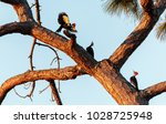 three juvenile pileated...   Shutterstock . vector #1028725948