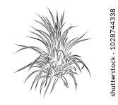 air plant tillandsias cactus...   Shutterstock .eps vector #1028744338