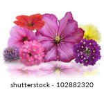 Colorful Fresh Flowers ,Close Up For Background - stock photo